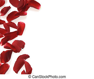 rose petals on white background - rose petals over white,...