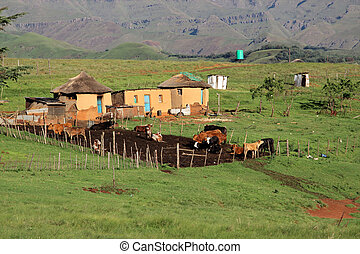 Rural huts and cattle - Small rural huts with cattle, South...
