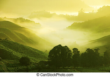 Tea Plantations at Cameron Highlands Malaysia Sunrise in...