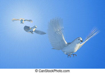Doves Flying