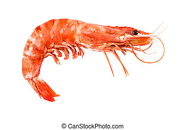 crustacean - tiger shrimp isolated on white