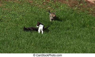 Barnyard Kittens Fight 5 - Barnyard Kittens play Fighting...