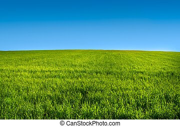 Green grass meadow with blue sky in summer