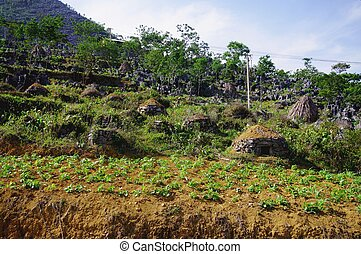Cemetery Hmong - Hmong cemetery in the area of Ha Giang in...