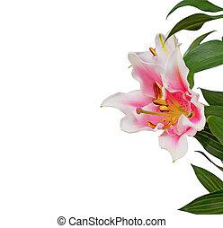 congratulazioni, fiori, bianco, Scheda, orchidea