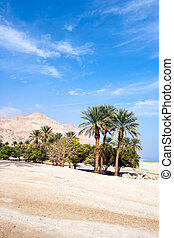 Oase - Israel - Ein Gedi oase at the Dead Sea. Israel