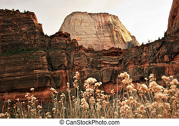 Great White Throne Red Rock Walls Straw Flowers Zion Canyon...