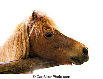 Horse head isolated on a white background.