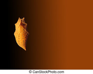 Cocoon of butterfly on brown background