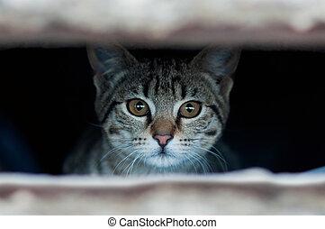 Kitten - Small kitten hidden behind the wooden bars