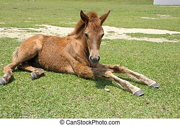 Filly stretching legs