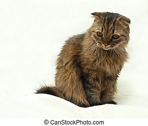 Funny cat - Cat on a white background