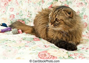 Funny cat - Cat on a pink background