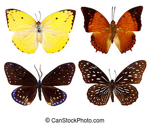 Set of exotic butterfly. Isolated over white with clipping...