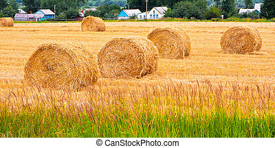Bales of hay at field in summer day