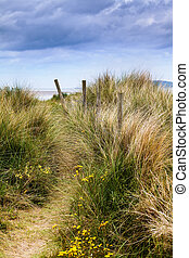 Dunes and grass - grass growing on dunes near the sea;...