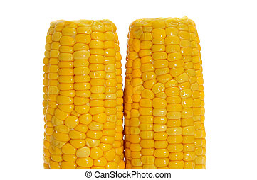 corncobs - a pair corncobs isolated on a white background