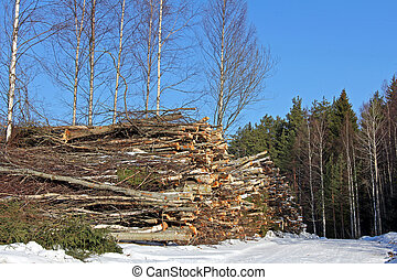 Wood Fuel Stacked in Forest - A heap of tree trunks for wood...