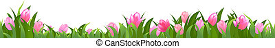 Tulips Panorama, Isolated On White Background, Vector...
