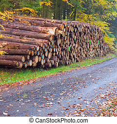 Stacked tree trunks in fall-colored forest. - Rich harvest...