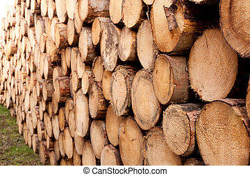 Stacked tree trunks background texture pattern. - Rich...