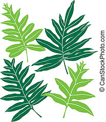 Hawaiian Ferns - Illustration of (4) different fronds of the...