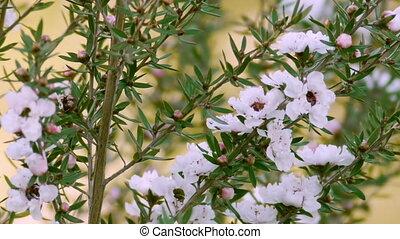 White Prairie Flowers