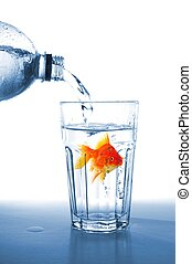 goldfish in drink glass showing jail prison free or freedom...
