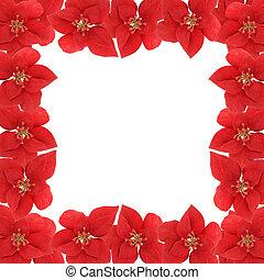 Poinsetta border - Poinsetta flower square border or frame...
