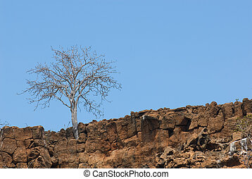 dry tree in the rocks