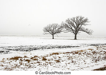 Two trees - Trees standing on the remote snow covered field