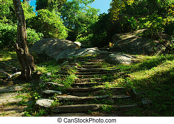 Old Stone Stairs - Stone stairs amidst lush vegetation in...