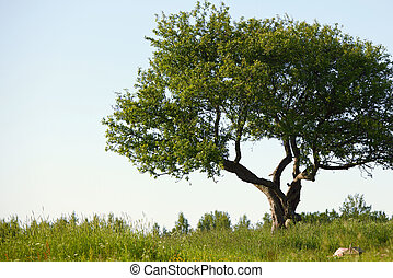 alone tree on green grass field