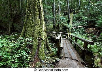 Oregon portrait - Hikers bridge along the McKenzie river...