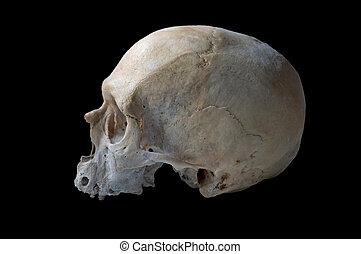 authentic human skull in left view isolated in black...