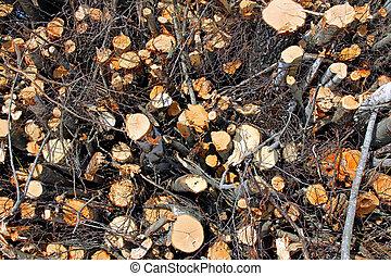 Biomass Wood Background