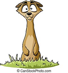 Meerkat on a white background, vector illustration