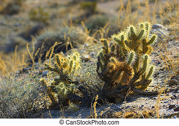 Anza Borrego Desert plants Southern California, USA