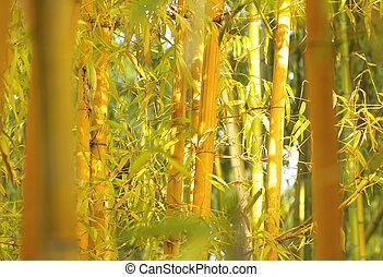 Orange bamboo trees background