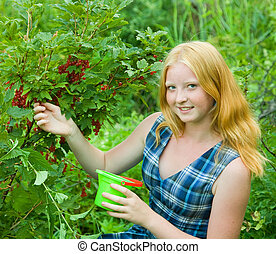 Teen girl currant in the field - young girl is picking red...