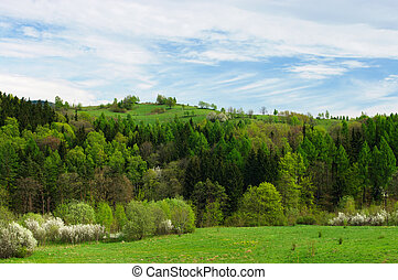 Spring scenery with fresh grass and flowered trees
