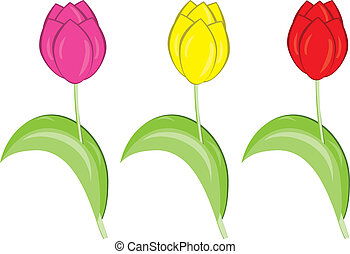 Tulips - Set of different colored tulips