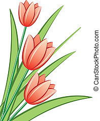 red tulips - vector bunch of red tulips