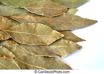 bay leaf - dry bay leaf for cooking on white background