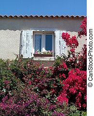 Window between flowers