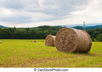 Rolls of straw in the field on a sunny day.