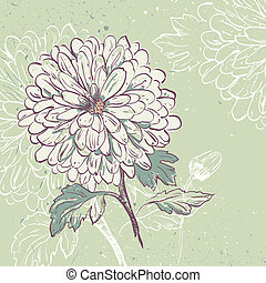 Blooming Chrysanthemum. Floral background with space for...