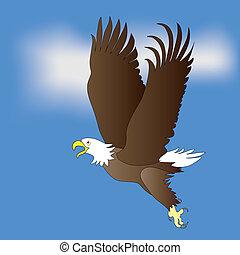 Eagle - Bald Eagle on blue sky