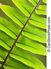 Beautiful lush fern frond - Beautiful close-up of a lush...