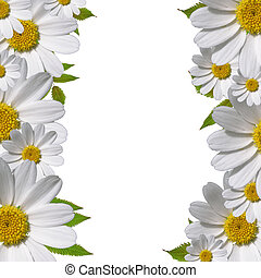 daisy flowers border with copy space